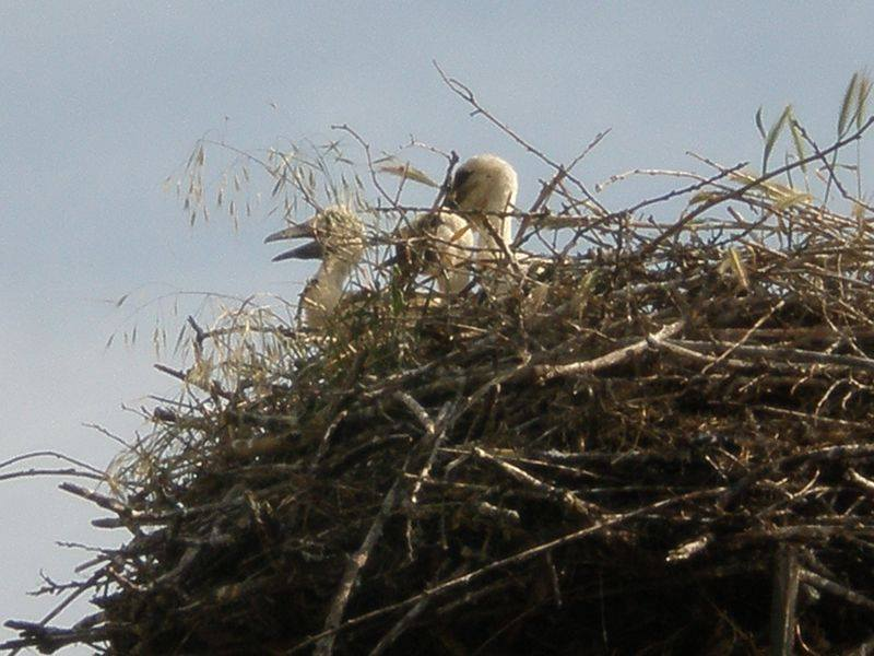 Az egyik gólyafészek még tavasszal