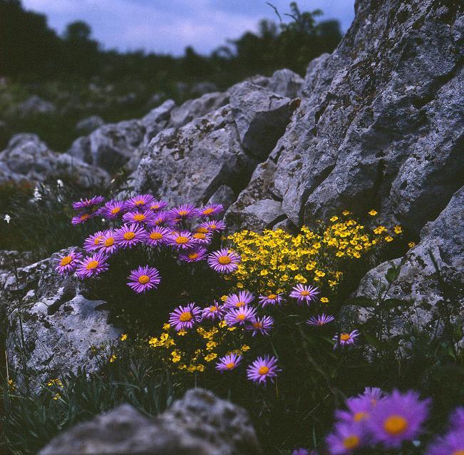 Élő sziklakert a völgy sziklapárkányán