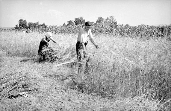 Aratópár 1947-ben