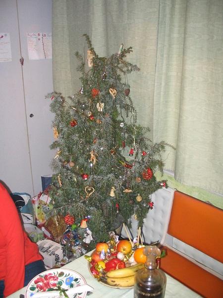 Karácsonyfa a szerző felvételén
