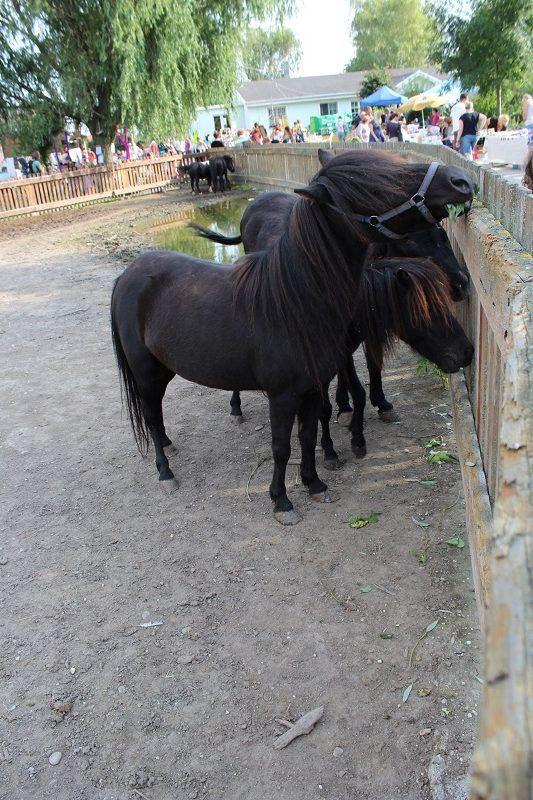 A nagyborsai lovasfarm