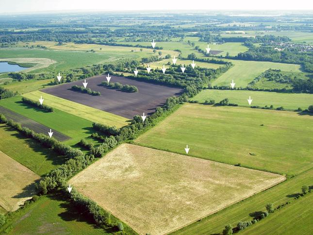 A fasorok és parcellahatárok jelzik az egykori csatornák vonalait. (Fotó: Takács Károly)