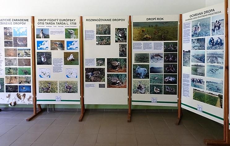 A Túzokos központ látogatóit fényképek és színes tablók várják az ismeretszerzés céljából kialakított teremben (Fotó: Németh István/Felvidék.ma)