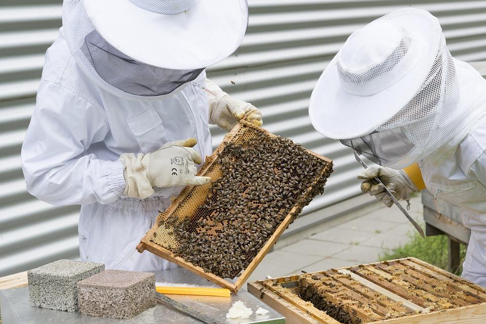 A jövő méhészeit képezik Szőgyénben
